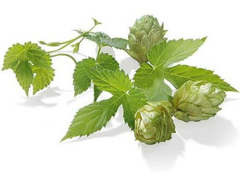 Hopfen-Pellets Saphir 4,2/% alpha 100g Typ 90 Aromahopfen Bier brauen